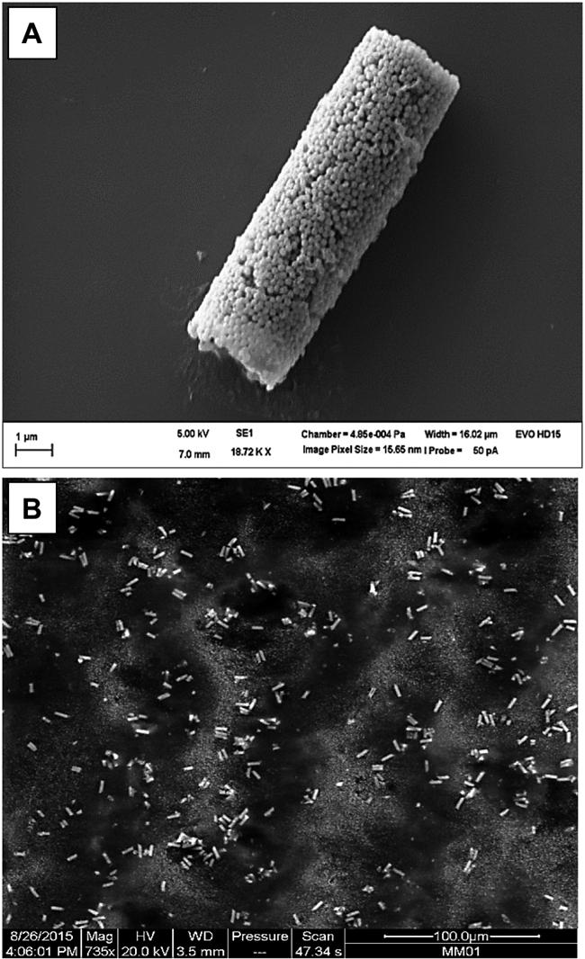 Asphärische, nanostrukturierte Mikropartikel zur gezielten Transfektion alveolarer Makrophagen: Teil 2 / Beitrag aus Pharm. Ind. 80, Nr. 5, 703-711 (2018)