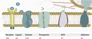 Life at the periphery / How cell surface proteins can influence bioprocesses